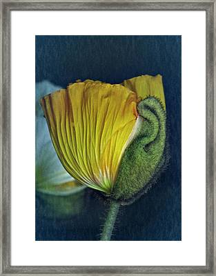 Framed Print featuring the photograph Vintage Poppy 2017 No. 1 by Richard Cummings