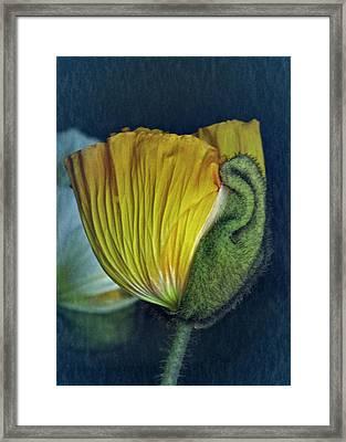Vintage Poppy 2017 No. 1 Framed Print by Richard Cummings