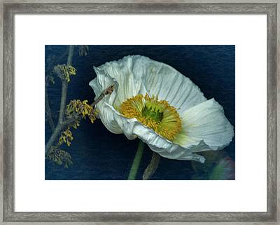 Framed Print featuring the photograph Vintage Poppy 2017 No. 2 by Richard Cummings