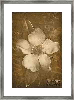Vintage Postcard Flower Framed Print by Jorgo Photography - Wall Art Gallery