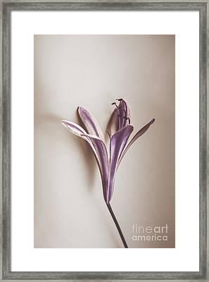 Vintage Purple Bloom Framed Print by Jorgo Photography - Wall Art Gallery