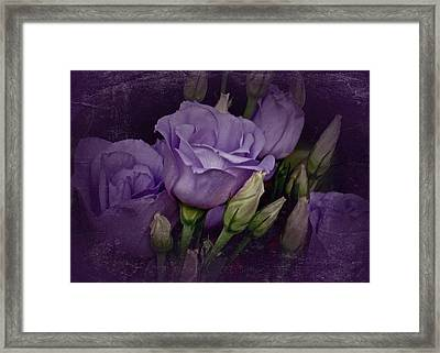 Vintage Purple Roses Framed Print by Richard Cummings