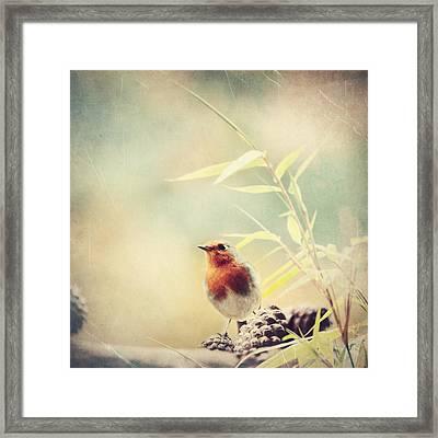 Vintage Robin 2 Framed Print by Heike Hultsch