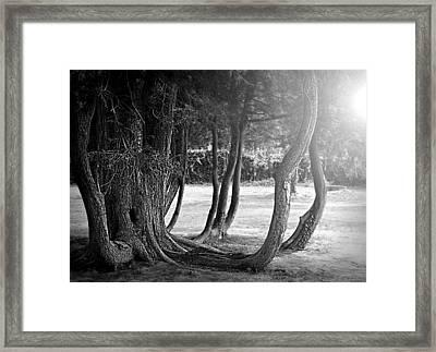 Vintage Roots Framed Print