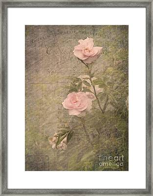 Vintage Rose Poster Framed Print by Liz  Alderdice