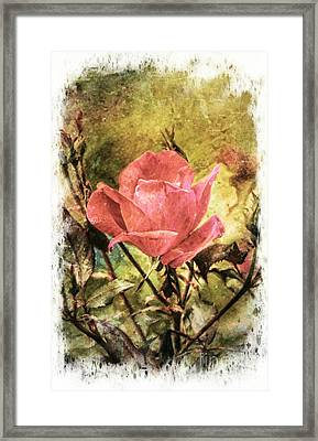 Vintage Rose Framed Print by Tina  LeCour