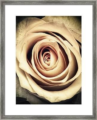 Vintage Rose Framed Print by Wim Lanclus