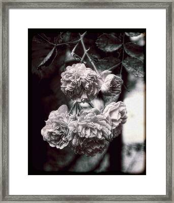 Framed Print featuring the photograph Vintage Roses by Louise Kumpf