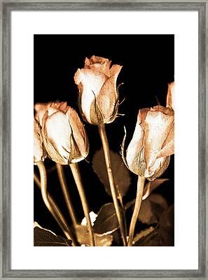 Vintage Roses Framed Print by Tom Gowanlock