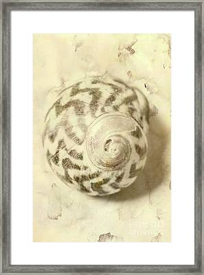 Vintage Seashell Still Life Framed Print by Jorgo Photography - Wall Art Gallery
