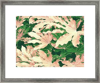 Vintage Season Pink Framed Print