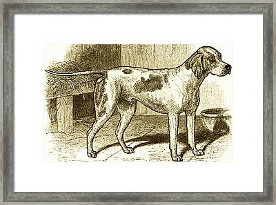 Vintage Sepia German Shorthaired Pointer Framed Print