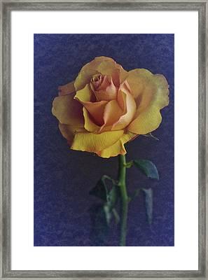 Vintage Single Rose Framed Print by Richard Cummings