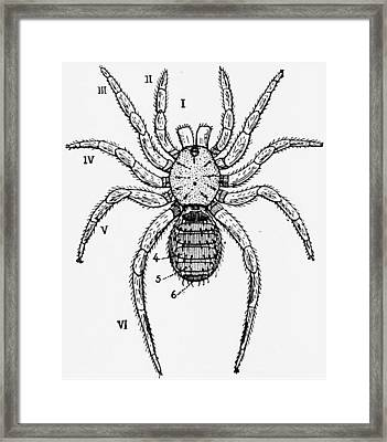 Vintage Spider Diagram Framed Print by ArtworkAssociates