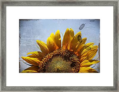 Vintage Sunflower- Fine Art Framed Print