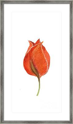 Vintage Tulip Watercolor Phone Case Framed Print by Edward Fielding