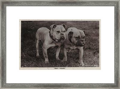 Vintage Two Bulldogs Framed Print by Gillham Studios