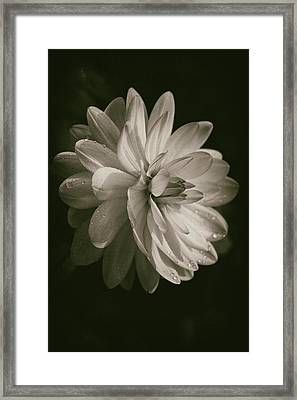 Vintage Velvet  Framed Print