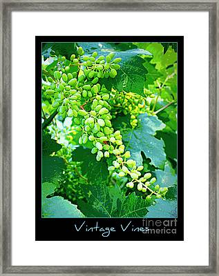 Vintage Vines  Framed Print by Carol Groenen