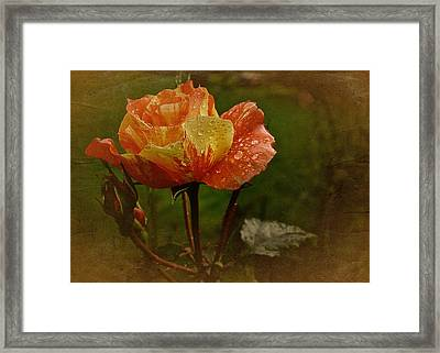 Vintage Sunset Rose Framed Print