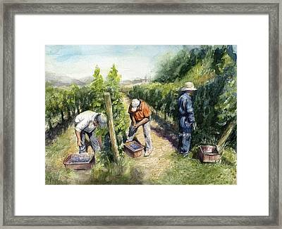 Vineyard Watercolor Framed Print by Olga Shvartsur