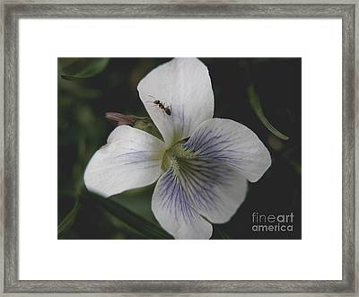 Viol-ant Framed Print by Michelle Hastings