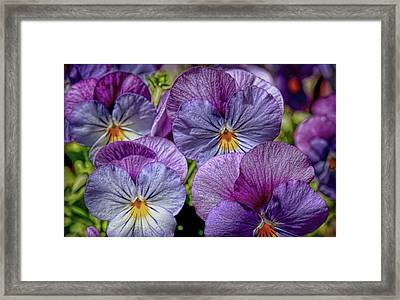 Framed Print featuring the photograph Viola by Bonnie Willis