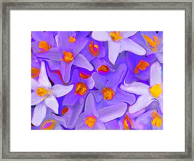Viola Molti Framed Print by Robert OP Parrish