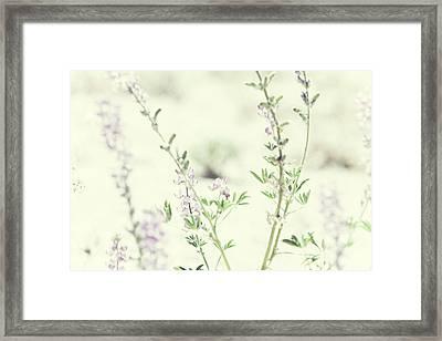 Violet And Green Bloom Framed Print by Amyn Nasser