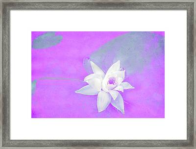 Violet And White Waterlily Framed Print by Nat Air Craft