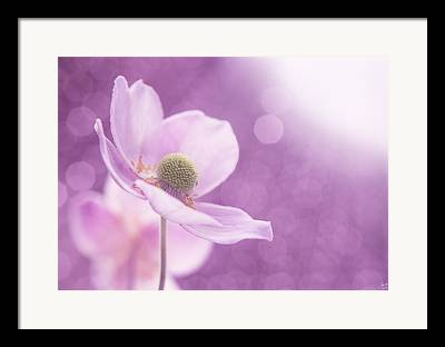 Stamen Digital Art Framed Prints
