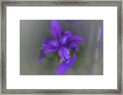 Violet Dream Framed Print