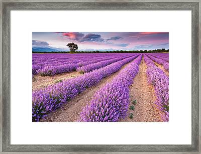 Violet Dreams Framed Print by Evgeni Dinev