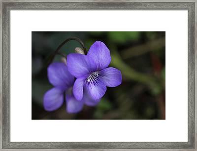 Violet Flowers Framed Print by Craig Strand