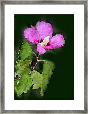 Violet Hibiscus Digital Painting Framed Print by Linda Phelps