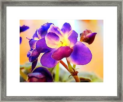 Violet In Bloom Framed Print