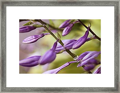 Violet Framed Print by Mark  France