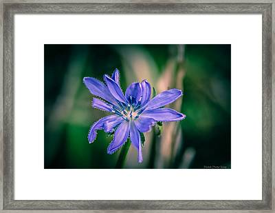 Framed Print featuring the photograph Violet by Michaela Preston