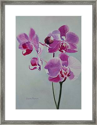 Violet Orchid Framed Print by Sharon Freeman