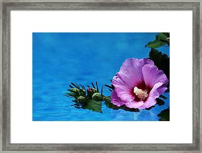 Violet Satin Framed Print