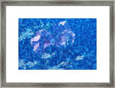Violet Satin Reflections Framed Print