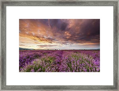 Violet Sunrise Framed Print by Evgeni Dinev
