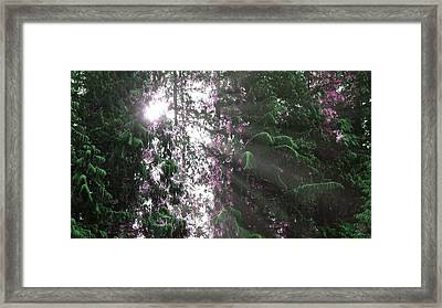 Violet Framed Print by Todd Clarke