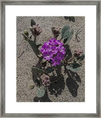 Violets In The Sand Framed Print