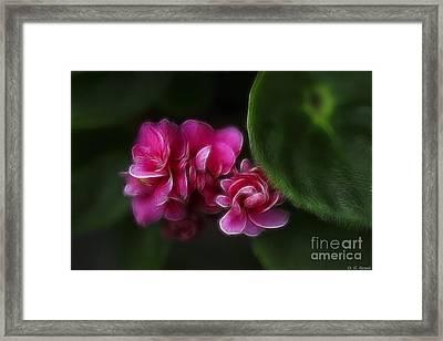 Violets Of Pink Framed Print by Deborah Benoit