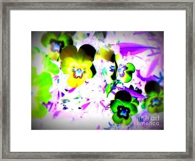 Violets Framed Print by Pauli Hyvonen