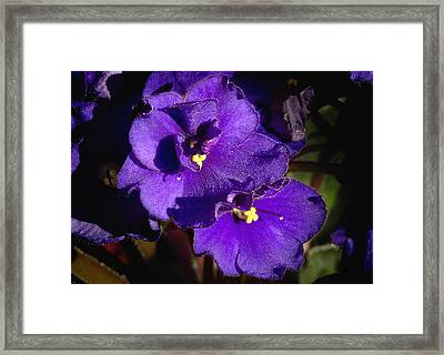 Framed Print featuring the photograph Violets by Phyllis Denton