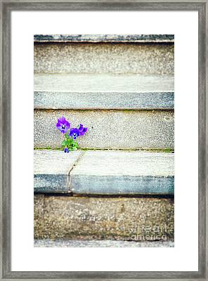 Framed Print featuring the photograph Violets    by Silvia Ganora