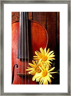 Violin With Daises  Framed Print