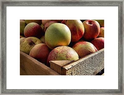 Virginia Apples  Framed Print by John S